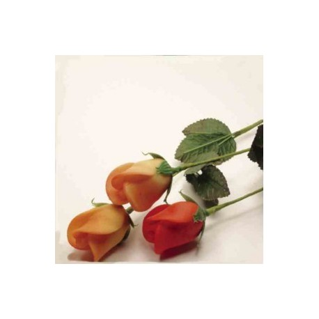 Růže na stonku